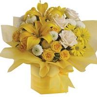 Sun Shine flowers